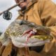An angler holds his rod with his teeth as he hoists a northern pike.