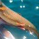 Canadian Fish in Reindeer Lake